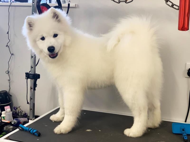 on site dog grooming salon