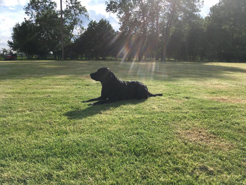 Blackberry enjoying the sun on the meadow